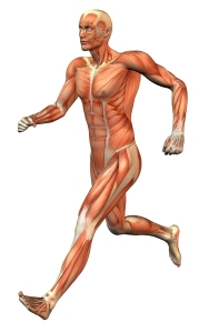 muscle running chiropractor