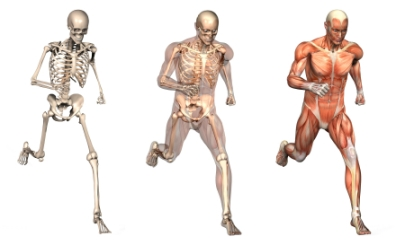 running muscles chiropractic