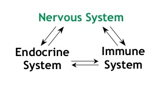 Immune system and chiropractic